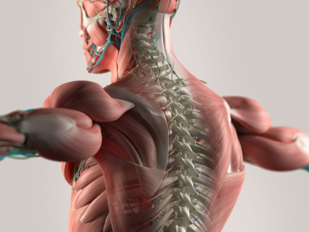 Cervical spondylosis Therapy